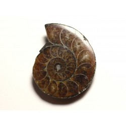 N8 - Pendentif Pierre Fossile - Ammonite Ammonoidea 35mm - 8741140016484