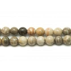 5pc - Perles de Pierre - Corail Fossile Boules 8mm 4558550025456