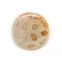 N11 - Cabochon de Pierre - Corail Fossile Rond 31mm - 8741140006492