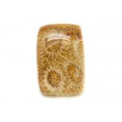 N20 - Cabochon de Pierre - Corail Fossile Rectangle 25x17mm - 8741140006584