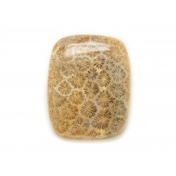 N21 - Cabochon de Pierre - Corail Fossile Rectangle 24x20mm - 8741140006591