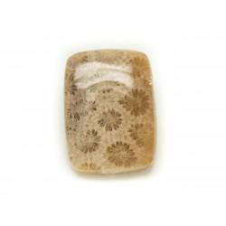 N22 - Cabochon de Pierre - Corail Fossile Rectangle 27x20mm - 8741140006607