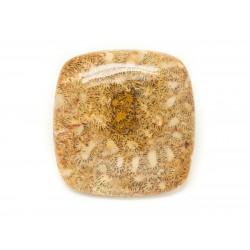 N26 - Cabochon de Pierre - Corail Fossile Rectangle Carré 37x36mm - 8741140006645