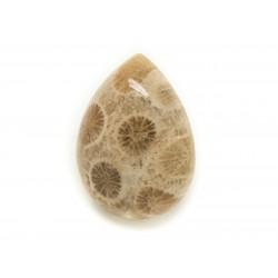 N28 - Cabochon de Pierre - Corail Fossile Goutte 21x16mm - 8741140006669