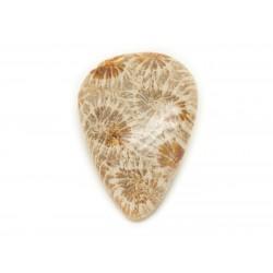 N38 - Cabochon de Pierre - Corail Fossile Goutte 28x20mm - 8741140006768